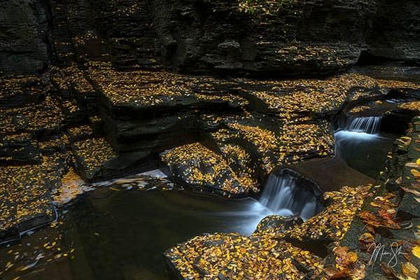 Watkins Glen Gold