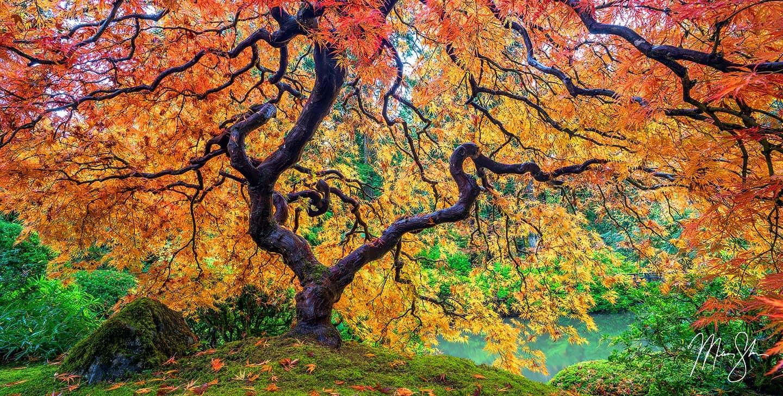 Tree of Fire - Portland, Oregon