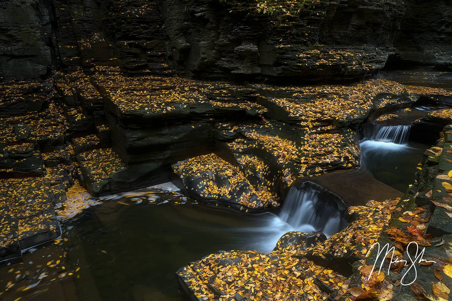 Open edition fine art print of Watkins Glen Gold from Mickey Shannon Photography. Location: Watkins Glen State Park, NY