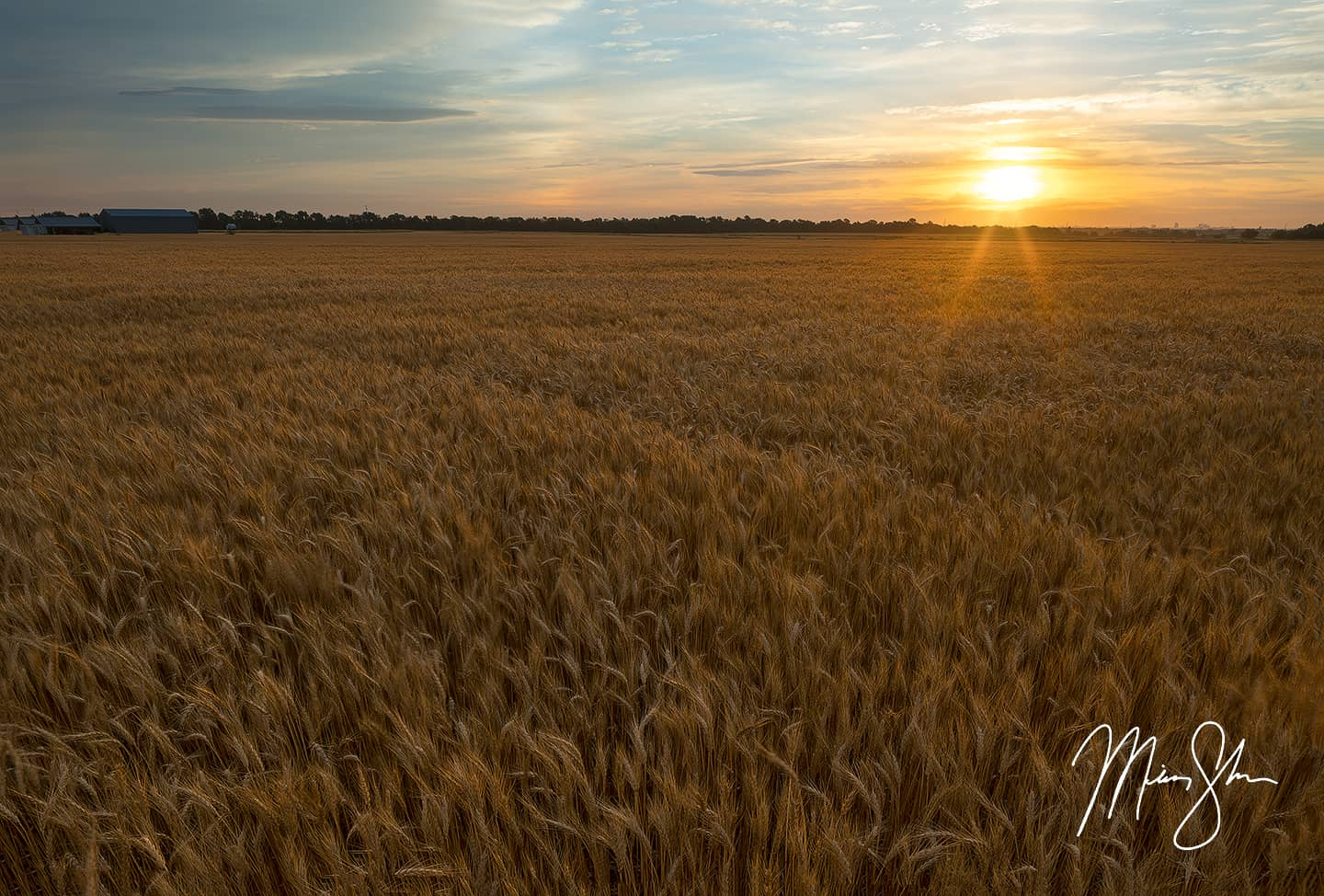 Image result for wheat field  kansas