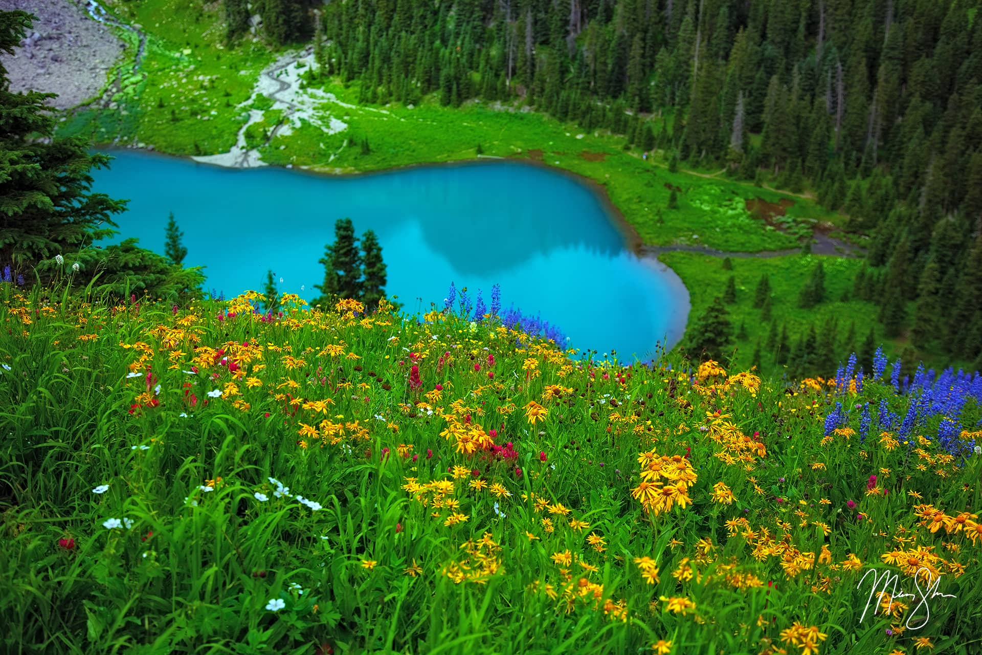 Open edition fine art print of Colorado Wildflowers from Mickey Shannon Photography. Location: Blue Lake, San Juans, Colorado